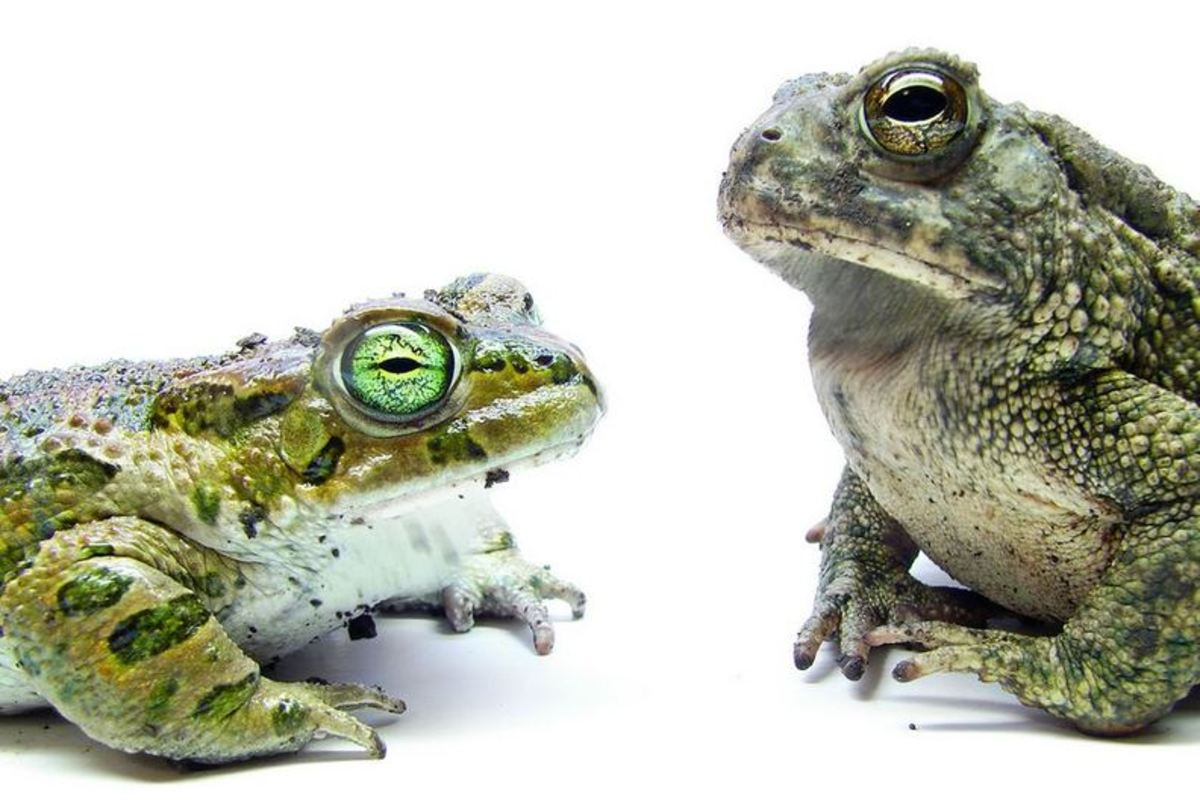 Is your brand asking stakeholders to kiss the frog